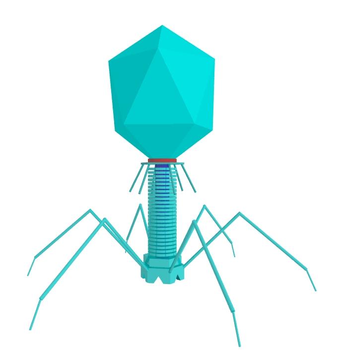 t4_bacteriophage.jpg